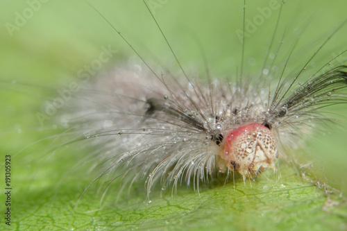 Macro worm on leaf