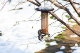 great tits on bird feeders on tree winter time - 191313902