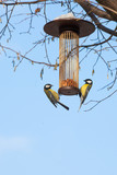 great tits on bird feeder on tree winter time - 191313978