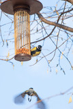 great tits on bird feeder on tree winter time - 191313996