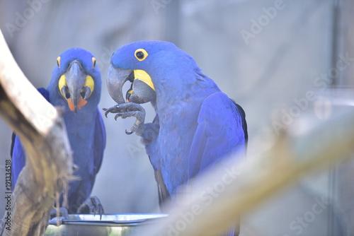 Fotobehang Papegaai Papagei Ara