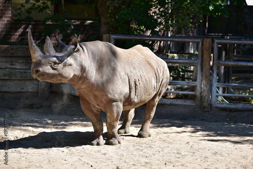 Plexiglas Neushoorn Nashorn Safari