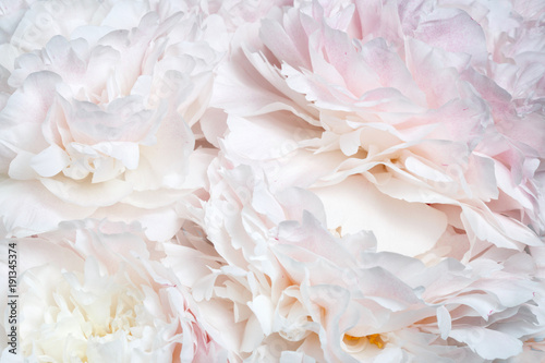 Foto Murales Abstract floral wallpaper from peony flowers.