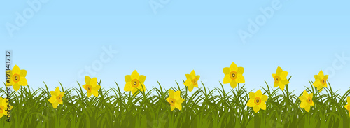 Yellow daffodils in green grass on a blue sky background. Border. Spring flowers. It can be used as a seamless sample. Vector illustration