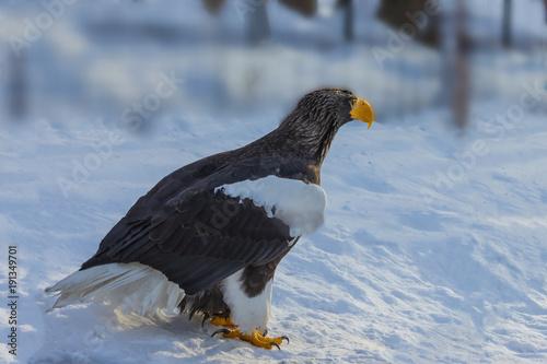 Aluminium Eagle A large bird of prey.