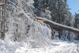 Large tree fallen onto an electrical wire in New england - 191359944