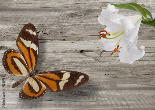 Tuinposter Vlinders in Grunge butterfly and white lily