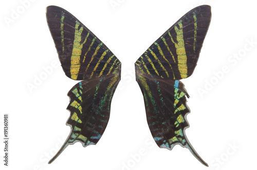 Fotobehang Vlinder wing green butterfly on white background