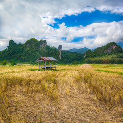 Beautiful rural landscape.Vang Vieng, Laos.