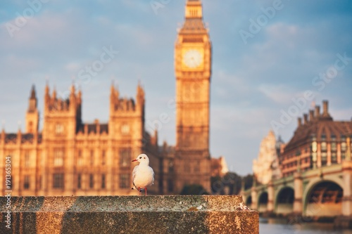 Fotobehang London Seagull against Houses of Parliament