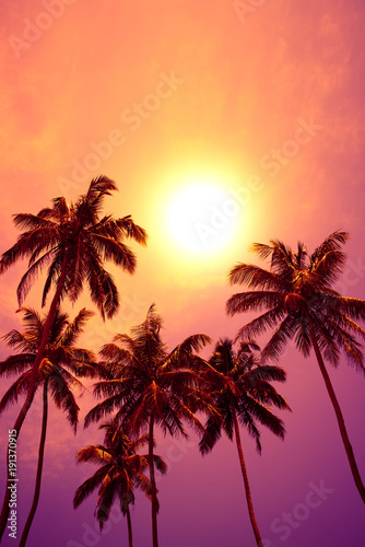 Foto op Aluminium Koraal Tropical palm trees at vivid sunset