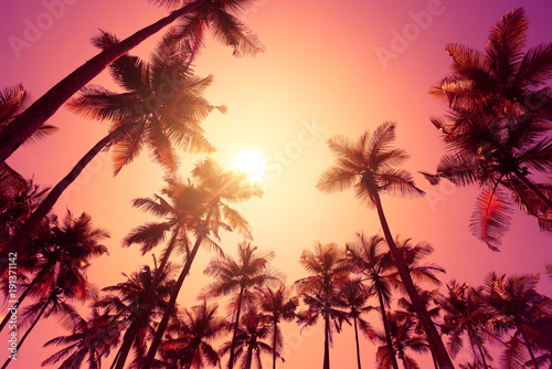 Papiers peints Corail Tropical sunset on a beach with palm trees
