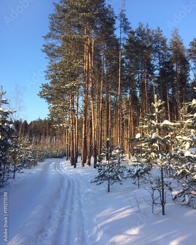 Ski track in winter forest.