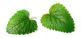 fresh herb, lemon balm isolated on the white - 191373950