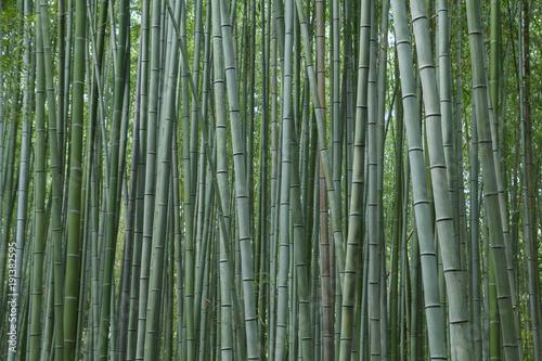 Fotobehang Bamboe Bamboo forest at Kyoto, Japan
