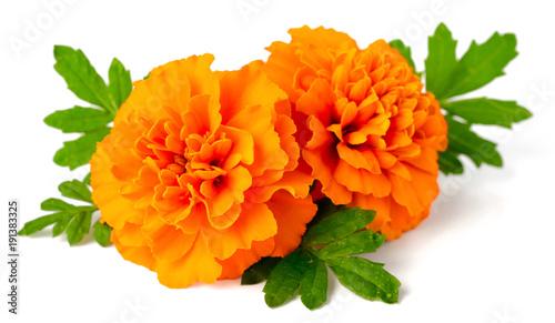 Fresh marigold flowers isolated on white background buy photos fresh marigold flowers isolated on white background mightylinksfo