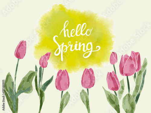 background  with watercolor tulips and hand drawn Lettering text hello spring