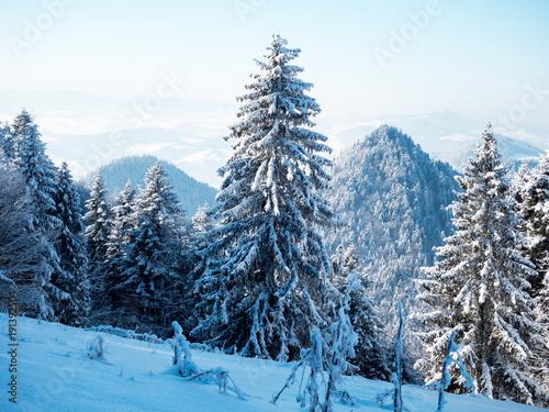 Foto op Aluminium Blauw Zimowy krajobraz polskich gór Pienin