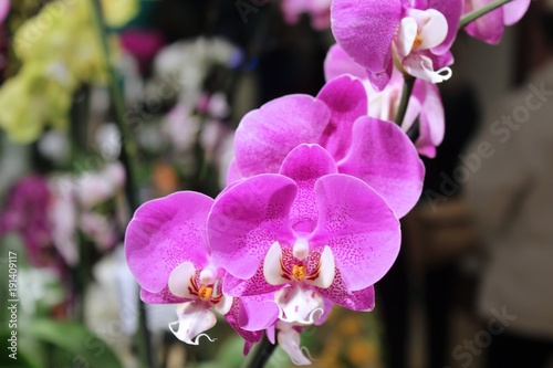 Sticker BEAUTIFUL PINK ORCHIDS