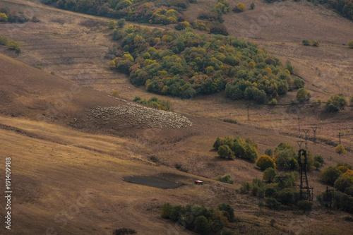 Fotobehang Cappuccino herd in autumn mountains