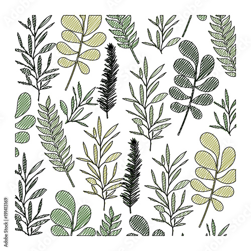 pattern leaves of plants on color crayon silhouette vector illustration