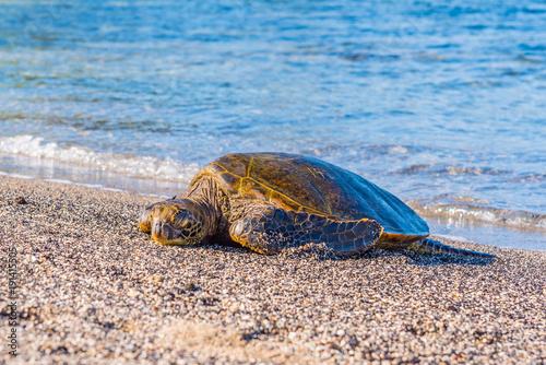 Fotobehang Schildpad Turtle Sleeping on the Beach