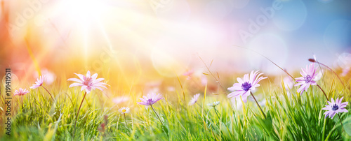 Keuken foto achterwand Gras Daisies On Field - Abstract Spring Landscape