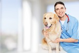 Beautiful young veterinarian with a dog - 191429372