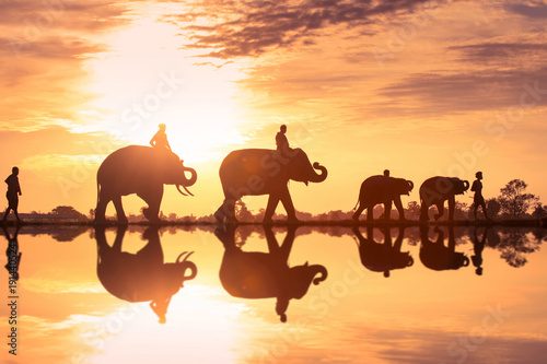 Foto Murales Silhouette of people and elephants are walking while sunset in Surin, Thailand.