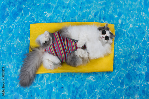cat rest in the pool on the air mattress