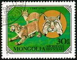 Ukraine - circa 2018: A postage stamp printed in Mongolia show Eurasian Lynx or Lynx lynx. Series: Wild cats. Circa 1979.