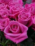 bouquet de roses - 191472782