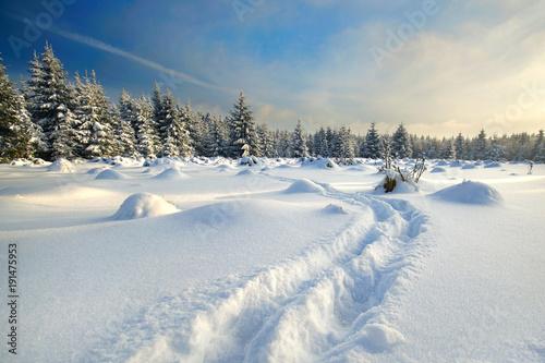 Tuinposter Weg in bos Fußspuren im Schnee im Wald