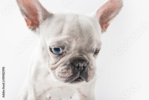 Deurstickers Franse bulldog close-up view of adorable french bulldog dog isolated on white