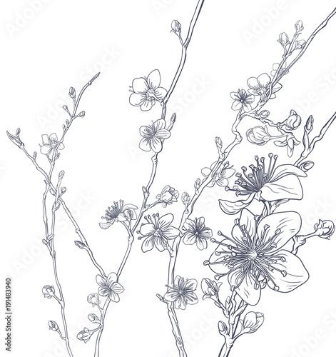 Cherry Blossom Peach Flowers Background Pattern - 191483940