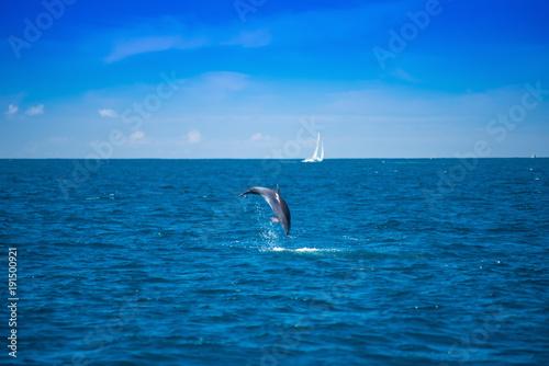 Fotobehang Dolfijn Kühner Sprung vor die Linse