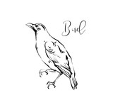 Hand drawn vector abstract artistic ink textured graphic sketch drawing illustration of forest bird isolated on white background - 191501520