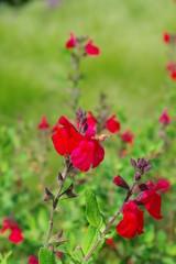 Fleurs roses dans un champ de verdure