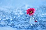 frische Blüte im Wasser - 191503523