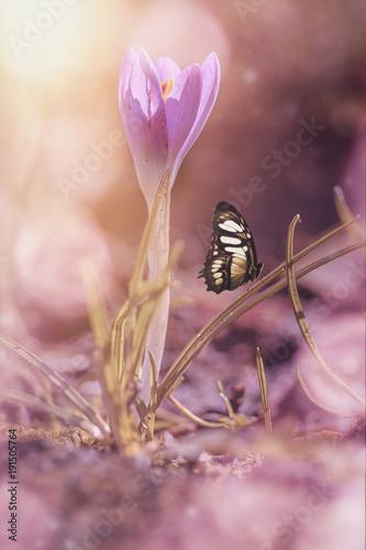 Aluminium Bee Frühlingserwachen