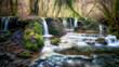 A stream runs through the forest creating many small waterfalls and natural pools filled with water. The natural scene reflects a tranquil, almost idyllic, atmosphere. - 191507550