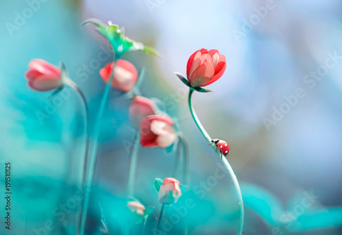 Beautiful pink flowers anemones and ladybug in spring nature outdoors against blue sky, macro, soft focus. Magic colorful artistic image tenderness of nature, spring floral wallpaper. - 191510125