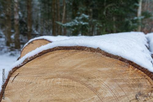 Foto op Canvas Brandhout textuur Schnee auf dem Baumstamm geschnitten