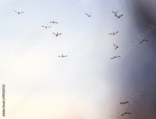 a flock of pesky mosquito insects curls against the backdrop of the  sky - 191530733
