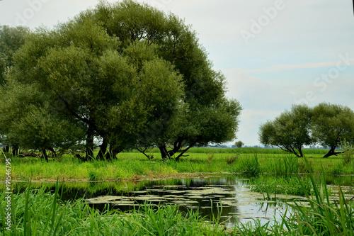 Fotobehang Olijf Nad rzeką