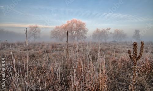 Fotobehang Cappuccino Foggy Landscape