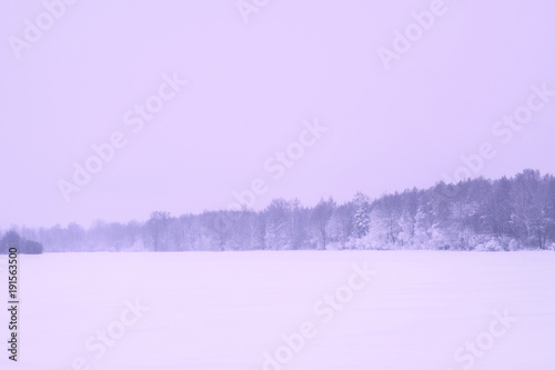 Aluminium Purper Winter landscape - the forest in the fog.