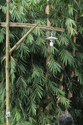 Fotobehang Olijf photo of bamboo trees
