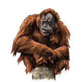 orangutan sits on tree stump sketch vector graphics color picture - 191582322