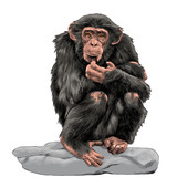 chimpanzee sitting on a rock and scratches his chin sketch vector graphics color picture - 191582536